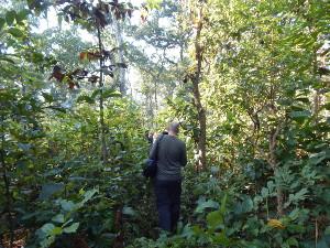 Dschungelwanderung im Chitwan NP