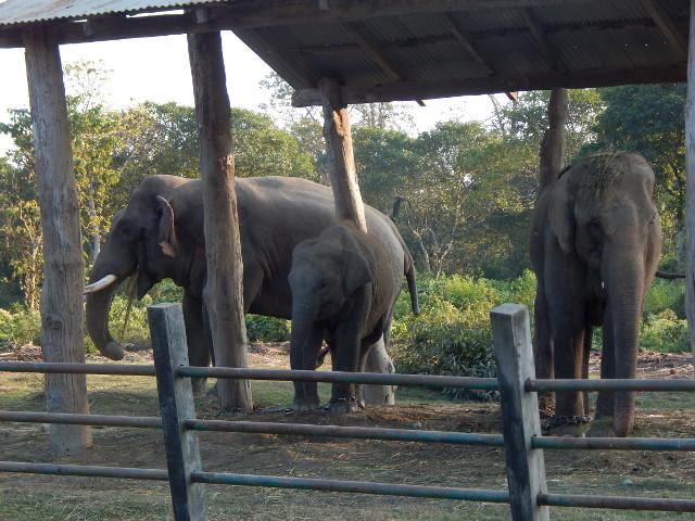 Die Elefantenzuchtstation