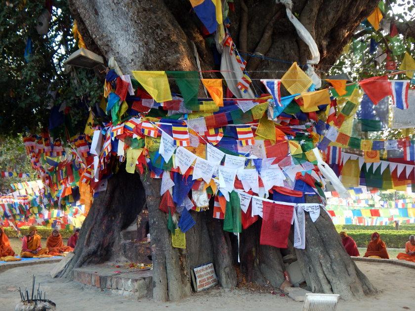 Bodhibaum in Lumbini, dem Geburtsort Buddhas in Nepal.