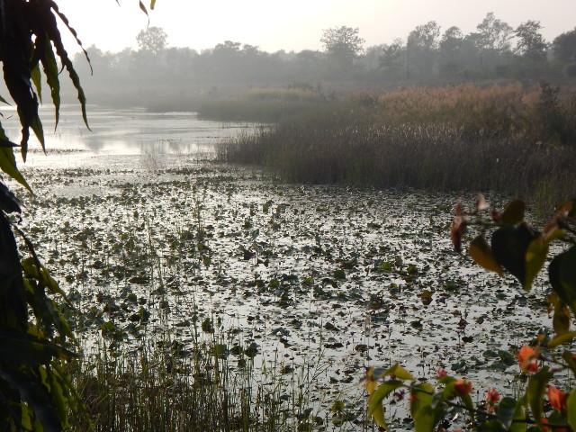 Lumbini, Teich mit Lotos im Abendlicht.