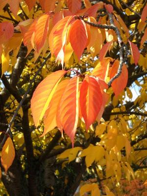 Leuchtende Herbstblätter in Orange
