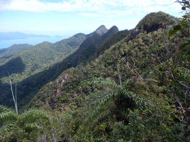 Der Regenwald von Langkawi, von der SkyBridge aus gesehen.