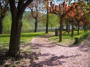 Der Nelkenbaum pudert die Wege in Rosa.