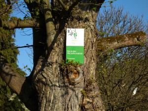 Route Welterbegärten Boppard