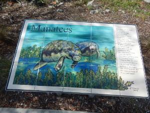 Manatees, Seekühe in Florida