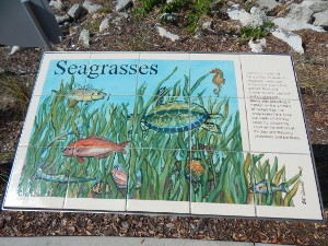 Flora und Fauna in Florida