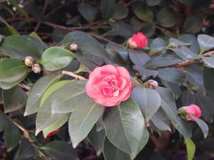 Im Februar blühen schon die Blumen.