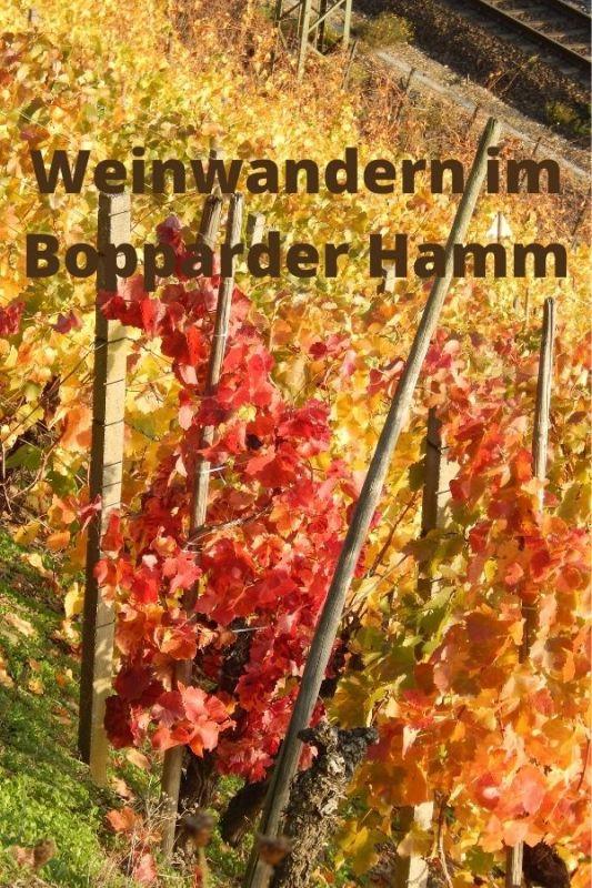 Weinwandern im Bopparder Hamm, das größte Weinanbaugebiet am Mittelrhein.