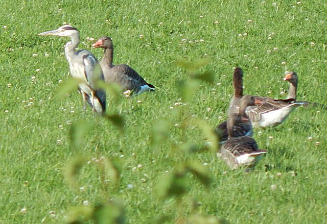 Vögel am Main-Donau-Kanal