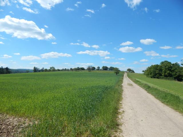 Der breite Panormaweg auf dem Eisenbolz bei Boppard