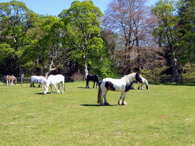 Horses at Ravelrig enjoying the sun