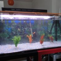 Nuevo acuario - 4