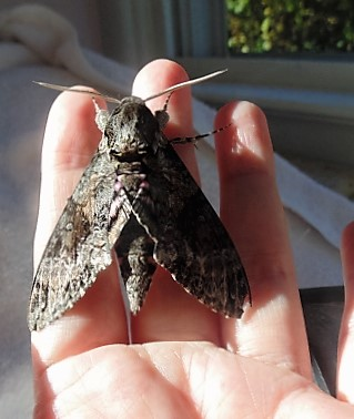 closeviewmothhand