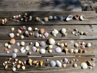 Our beach treasures
