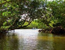 The Mangrove Trail