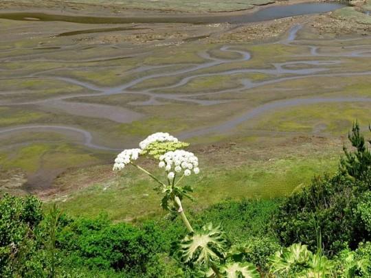 Estero Bay Mudflats