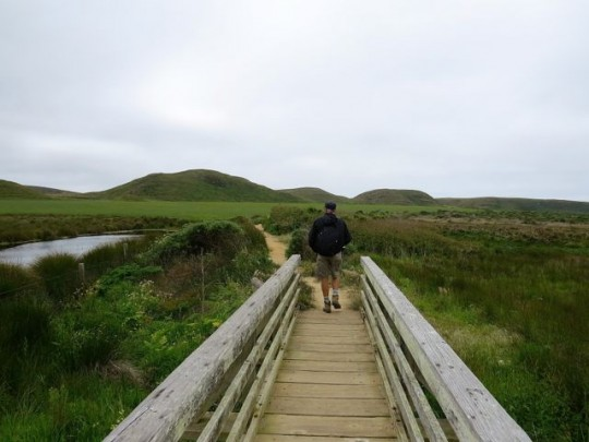 Lovely Trail Through Wetlands