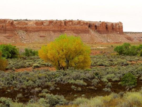 Late Autumn On The Mesa