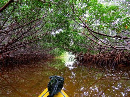 Paddling through the mangrove tunnels