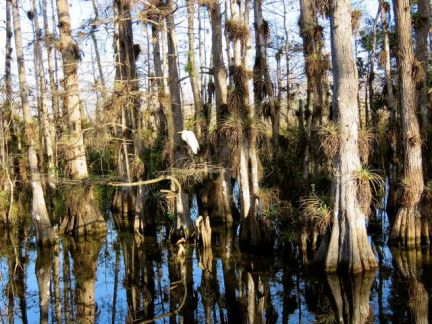 In a cypress strand
