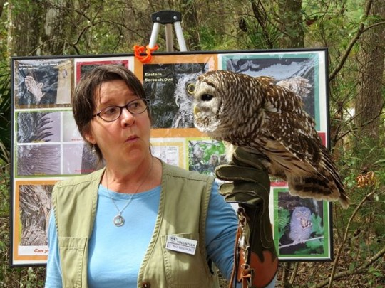 Barred Owl Showing Off At A Nature Presentation