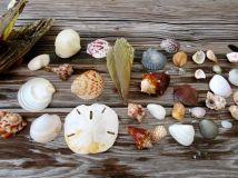 Seashells from Sanibel