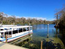 Jungle cruise on the Wakulla River