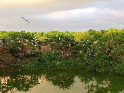 Sanctuary Ponds