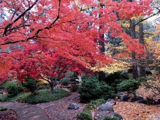 Brilliant Fall Colors In Ashland