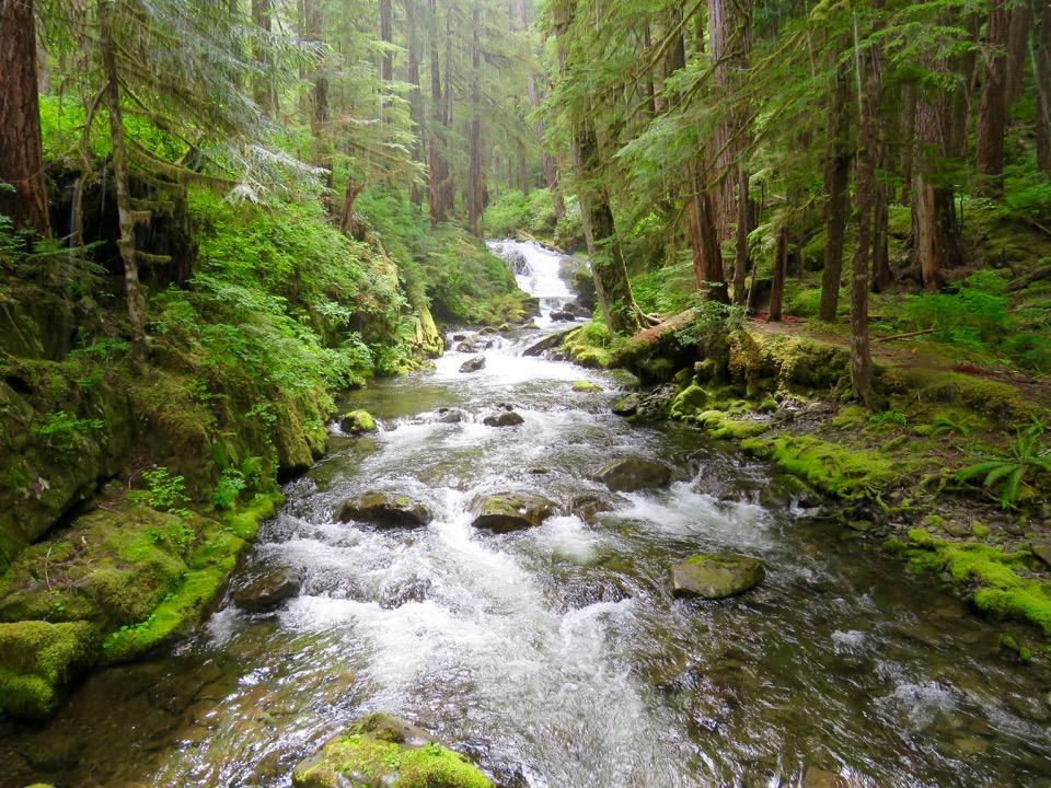 Sol Duc Rainforest, Olympic National Park