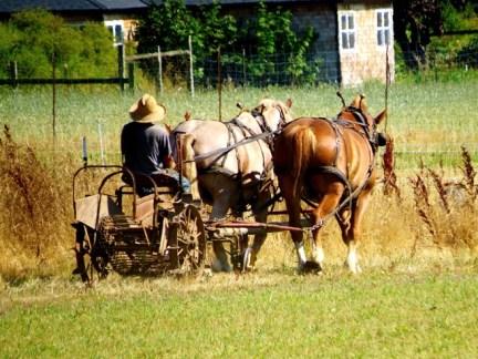 Plowing his fields