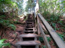 Trails in Pacific Rim National Park Preserve