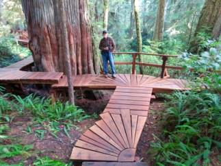 Artistic boardwalks on the Rainforest Loop Trails