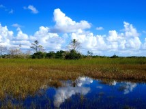 Shark Valley, Everglades National Park, Florida