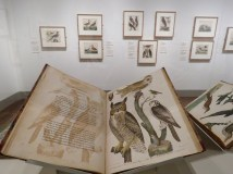 Exhibit of Alexander Wilson's bird drawings