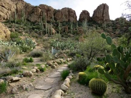 A beautiful arboretum of desert plants