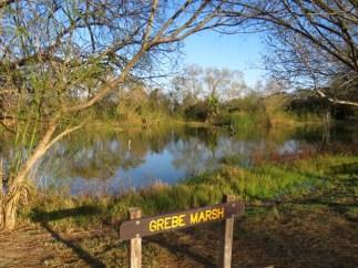 Grebe Marsh