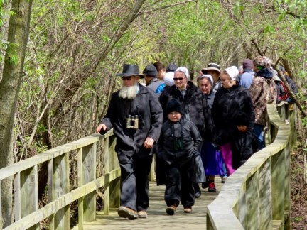 Birding on the boardwalk at Magee Marsh