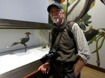 Sadly, we'll never see an Ivory-billed Woodpecker in the wild