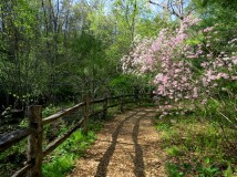 Miles of beautiful trails at the arboretum