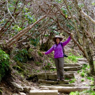 Craggy Gardens Trail, this would be beautiful in spring with rhododendrons in bloom