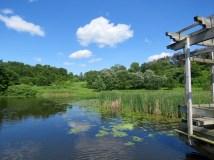 Natural area at the botanic garden
