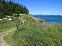 Middle Head Trail