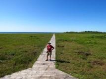 Boardwalk through a blueberry bog (they were delicious!)