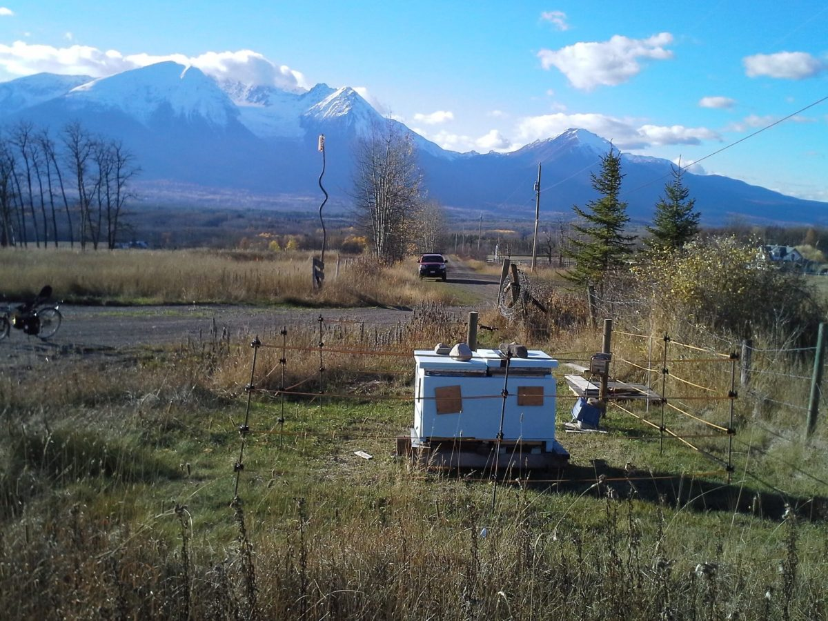 Electric Fences Make Good Neighbours—for People and Bears