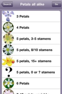 Petals Numbers Choices