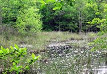 wetlands avoidance