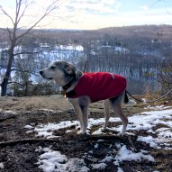 Odie poses at the Raven Rocks overlook. Pound Ridge hills in the background.