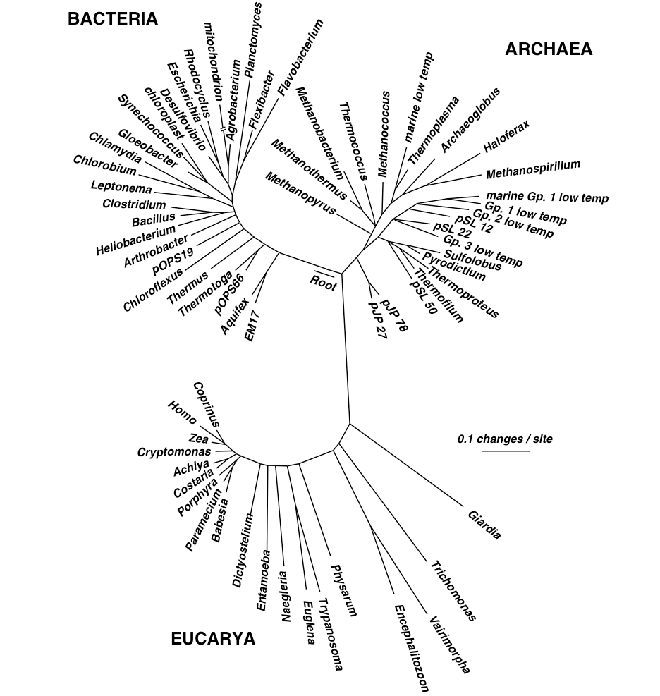 medium resolution of figure 1a evolutionary tree presented by charles darwin in on the origin of species figure 1b a hypothesis of evolutionary relationships between the
