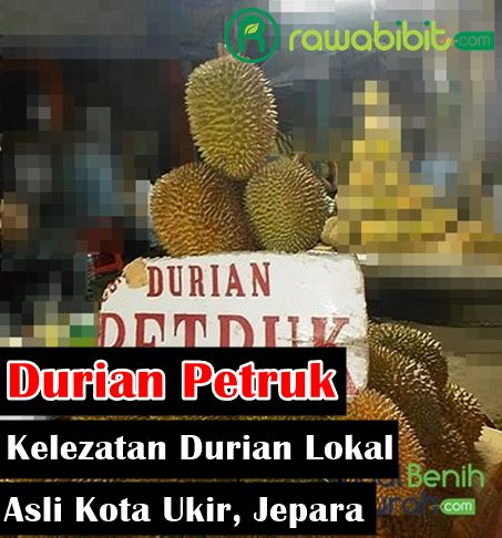 Durian Petruk, Mancungnya Kelezatan Buah Durian Lokal Unggulan Asli dari Kota Ukir, Jepara